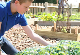Attending to the school garden